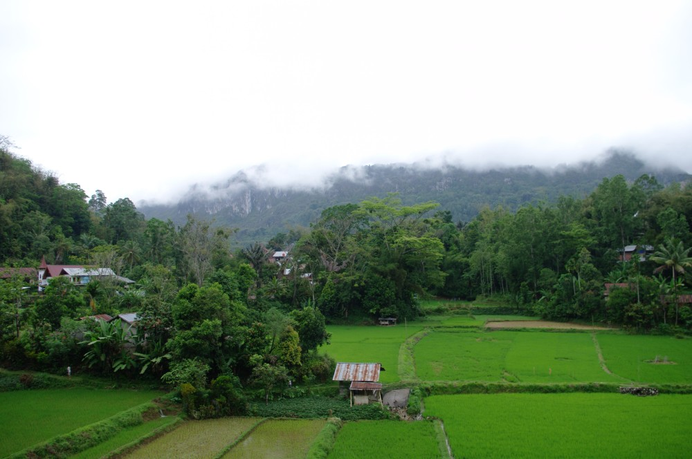 Lemo, Sulawesi